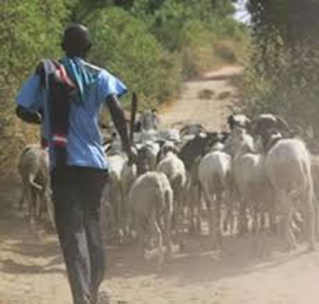 Bergers mobilisés, Condamnation, Voleur de bétail