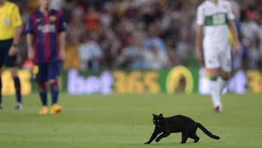 Chat noir Nou