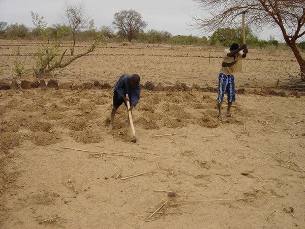 Dégradation des terres arables au Sénégal, 550 milliards de Fcfa qui partent en fumée chaque année