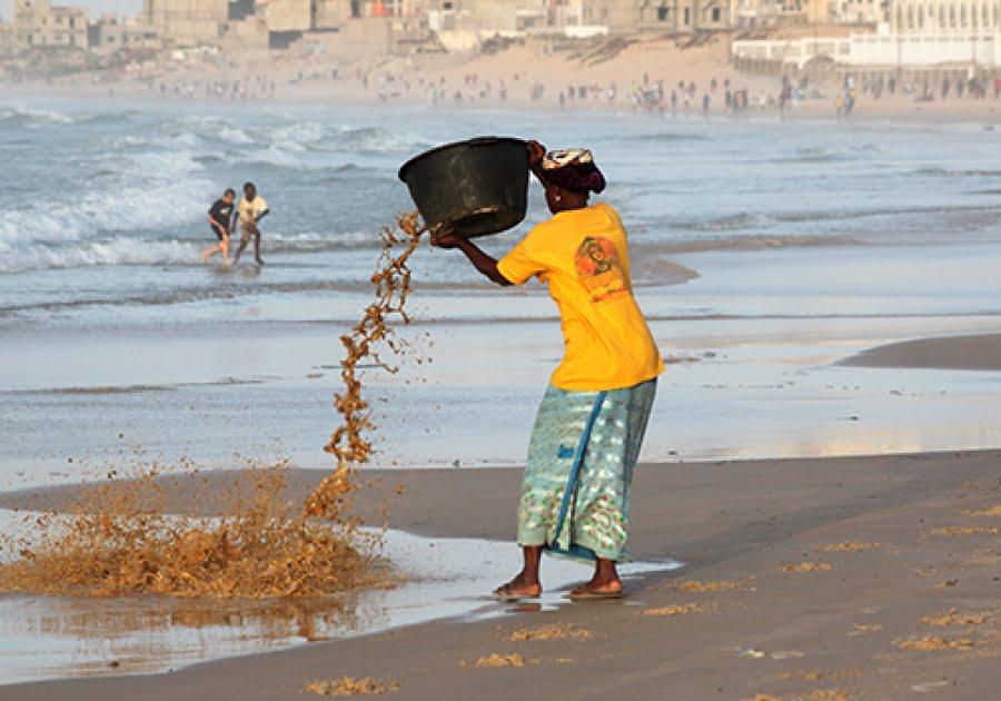 Le  système d'information environnementale jugé pauvre au Sénégal