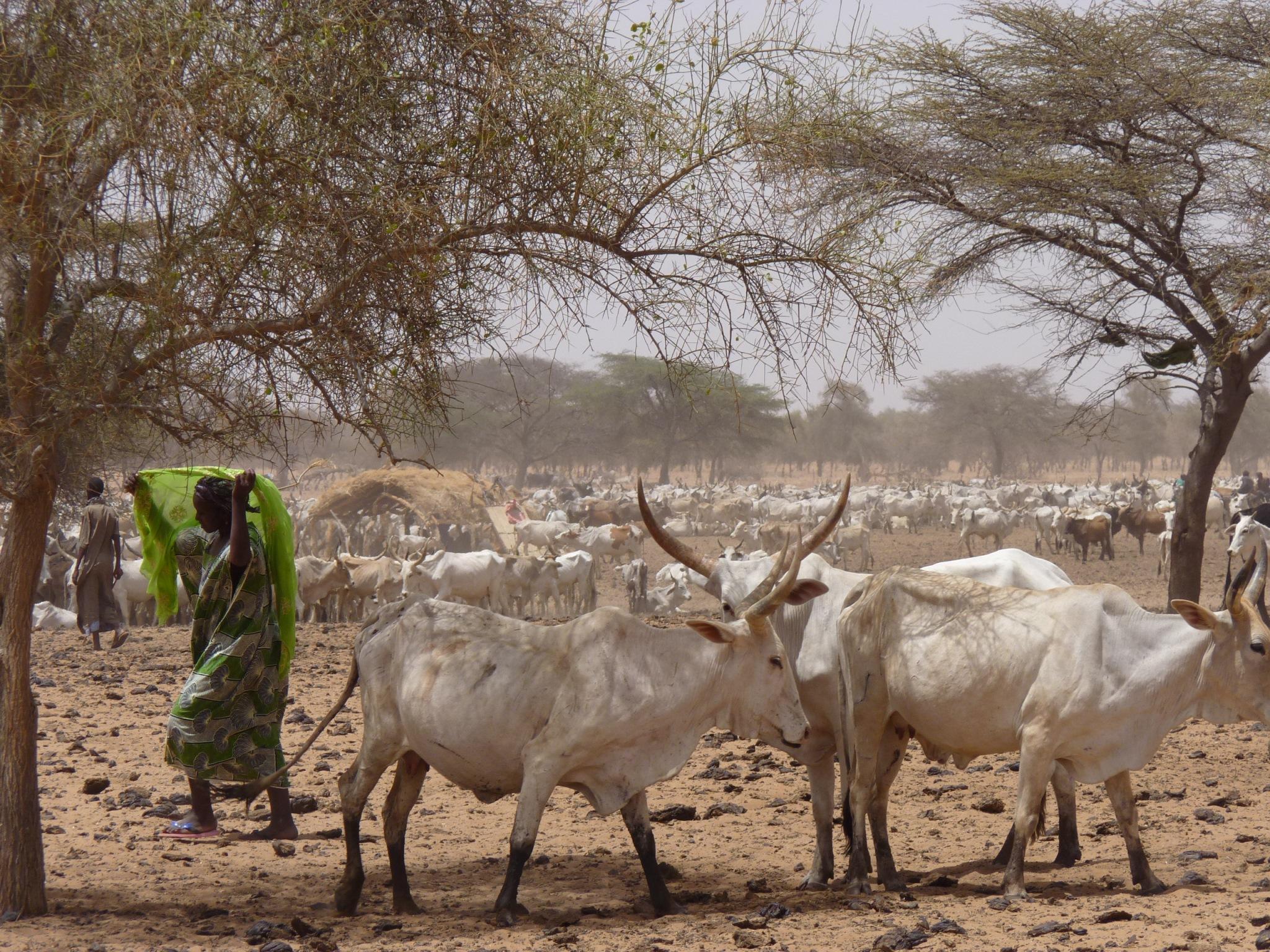 Journée Nationale, l'élevage, Matam à l'honneur