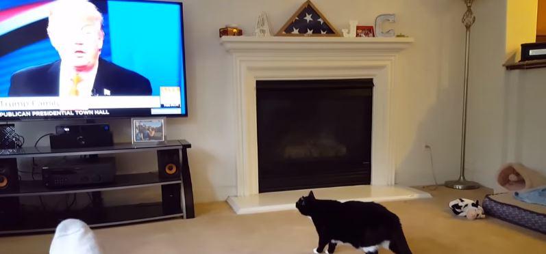 Vidéo: La réaction de ce chat en voyant l'image de Donald Trump à la Télé. Incroyable !