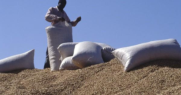 250.000 tonnes annoncées, 46 milles tonnes, 736 camions, arachides, collectées, directeur général de la Sonacos, Pape Dieng, Sonacos