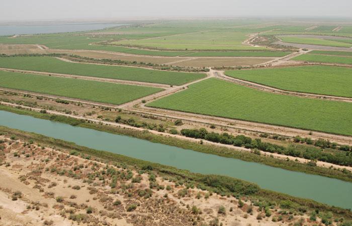 Innovations et révolution des pratiques agricoles à Podor