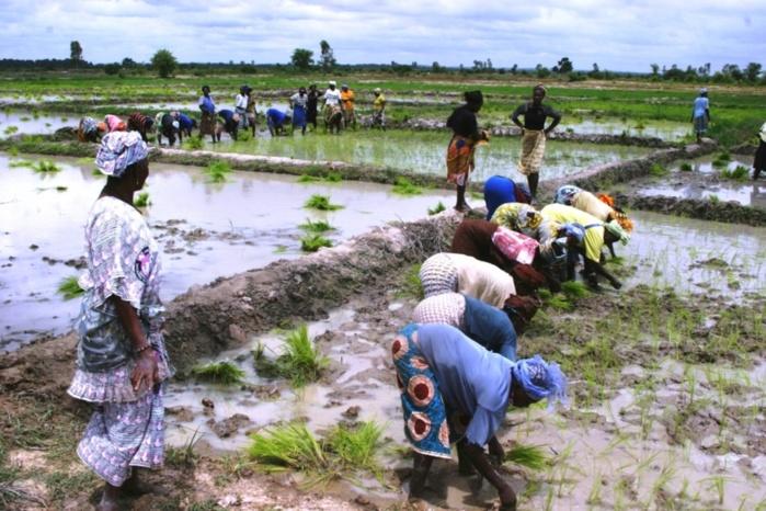 L'Etat du Sénégal et ses partenaires auraient beaucoup investi dans la vallée du fleuve Sénégal