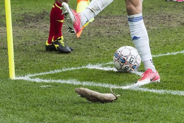 Danemark: des rats morts jetés sur les joueurs de Copenhague