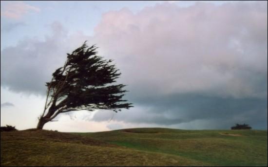 40 Km/h, annoncé sur la côte, Un vent