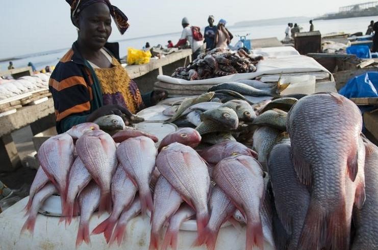 des côtes du Sénégal, Disparaissent, Les poissons