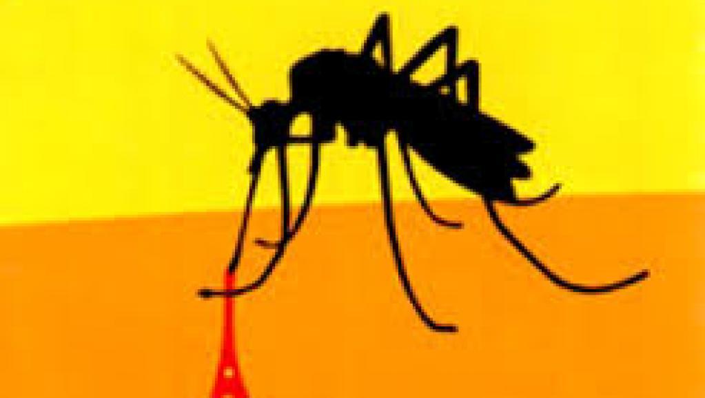 L'OMS confirme un cas de fièvre jaune en Gambie et au Sénégal - Senego.com