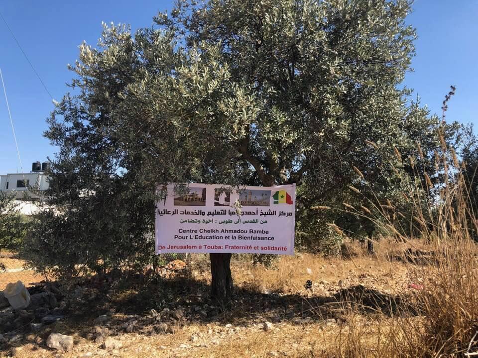 keur serigne touba palestine 2 - La Palestine tient sa promesse: Un terrain de 2000m2 offert à Touba pour...