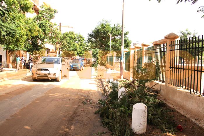 arbre arache pluie 2 - (20 photos) -Tornade à Dakar : Arbres déracinés, toits envolés...