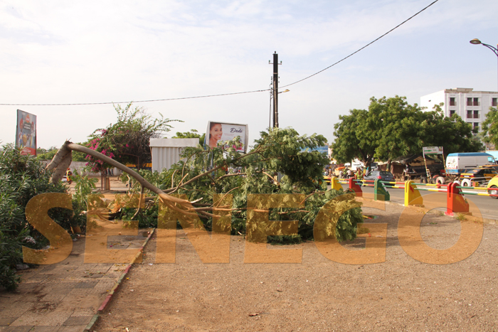 hlm pluie arbre arache 2 - (20 photos) -Tornade à Dakar : Arbres déracinés, toits envolés...