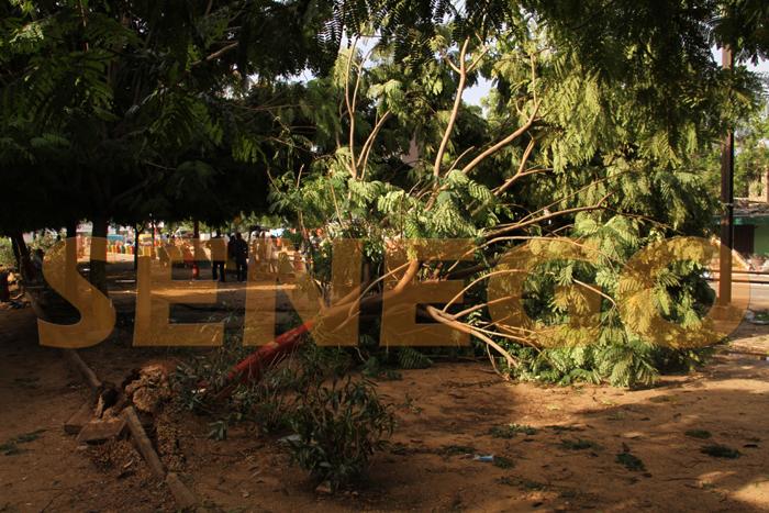 hlm pluie arbre arache 3 - (20 photos) -Tornade à Dakar : Arbres déracinés, toits envolés...