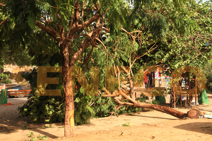 hlm pluie arbre arache 4 - (20 photos) -Tornade à Dakar : Arbres déracinés, toits envolés...