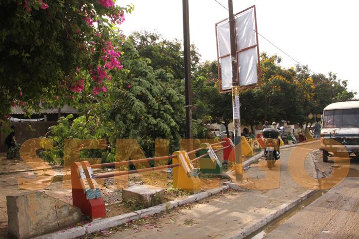 hlm pluie arbre arache 5 - (20 photos) -Tornade à Dakar : Arbres déracinés, toits envolés...