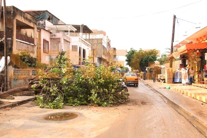 hlm pluie arbre arache 6 - (20 photos) -Tornade à Dakar : Arbres déracinés, toits envolés...