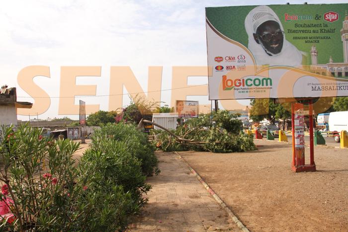 hlm pluie arbre arache 7 - (20 photos) -Tornade à Dakar : Arbres déracinés, toits envolés...