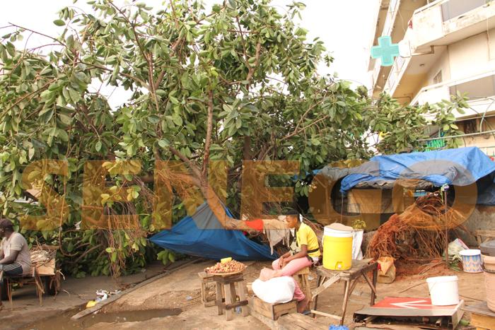 marche colobane pluie arbre arache 3 - (20 photos) -Tornade à Dakar : Arbres déracinés, toits envolés...
