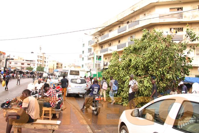 marche colobane pluie arbre arache 4 - (20 photos) -Tornade à Dakar : Arbres déracinés, toits envolés...