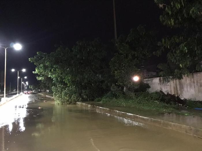 pluie vent violent 2 - (20 photos) -Tornade à Dakar : Arbres déracinés, toits envolés...