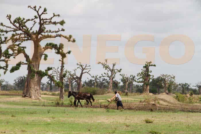 Foncier : Les habitants de Ndingler et de Djilakh sur le qui-vive